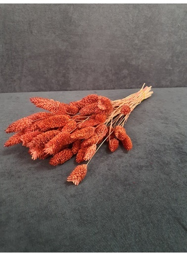 Kuru Çiçek Deposu Kuru Çiçek Kuş Otu 35-40 Cm  Koyu Mor  Oranj